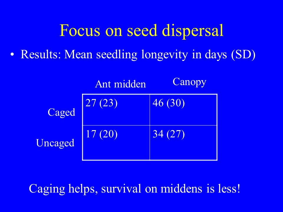 Focus on seed dispersal Results: Mean seedling longevity in days (SD) 27 (23)46 (30) 17 (20)34 (27) Ant midden Canopy Caged Uncaged Caging helps, survival on middens is less!
