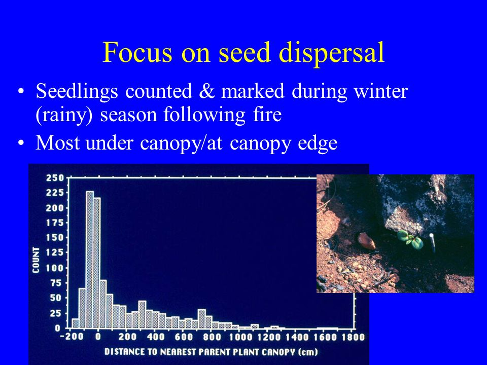 Focus on seed dispersal Seedlings counted & marked during winter (rainy) season following fire Most under canopy/at canopy edge
