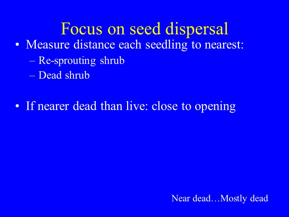 Focus on seed dispersal Measure distance each seedling to nearest: –Re-sprouting shrub –Dead shrub If nearer dead than live: close to opening Near dead…Mostly dead