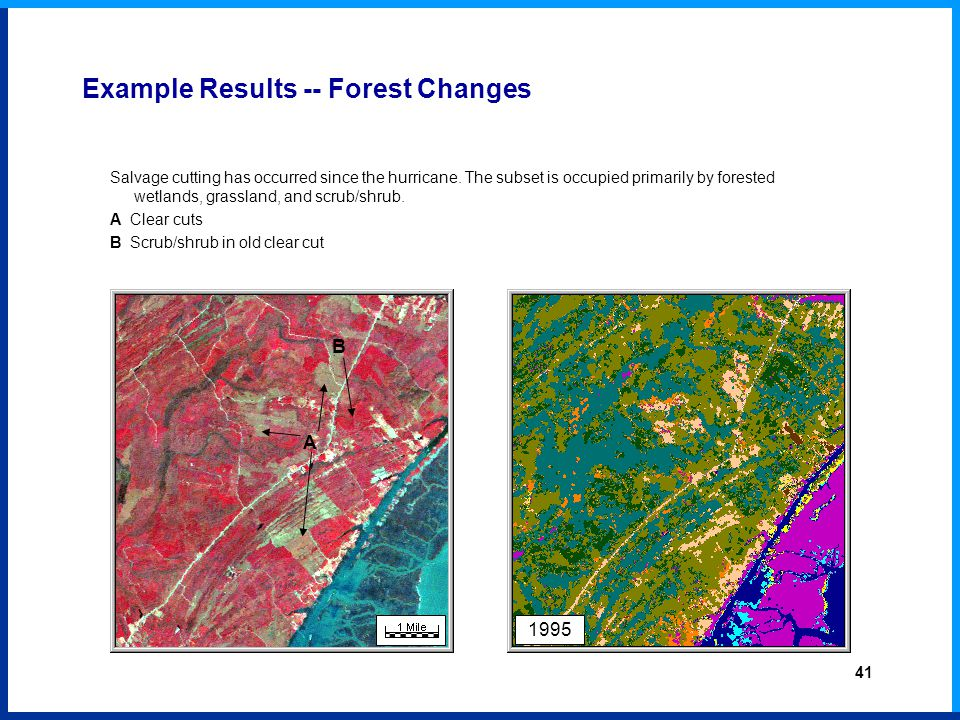 1995 Example Results -- Forest Changes Salvage cutting has occurred since the hurricane.