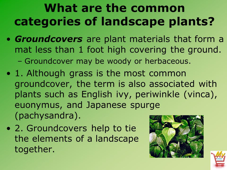 What are the common categories of landscape plants? Groundcovers are plant materials that form a mat less than 1 foot high covering the ground. –Groun