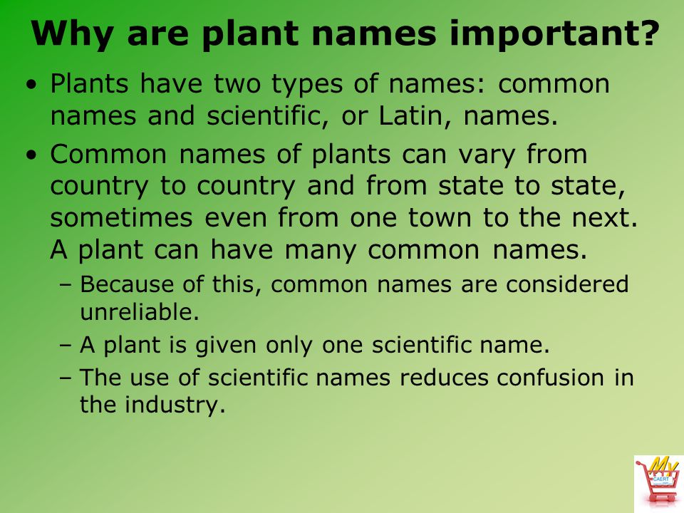 Why are plant names important.