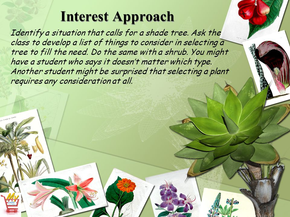 What are the common categories of landscape plants.