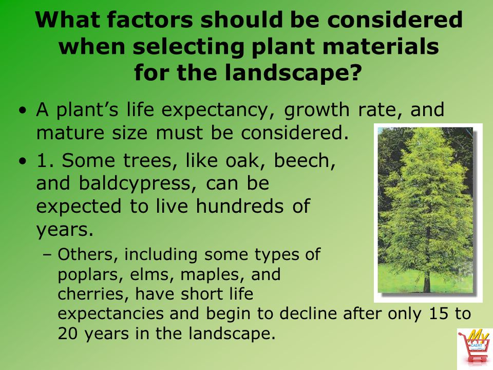 What factors should be considered when selecting plant materials for the landscape.