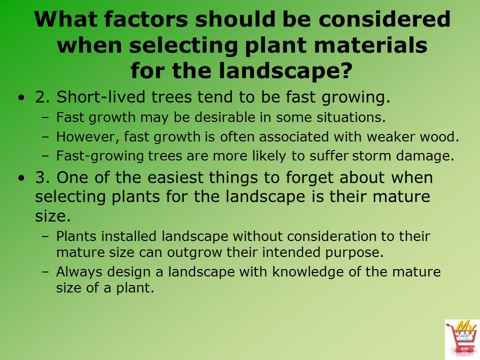 What factors should be considered when selecting plant materials for the landscape? 2. Short-lived trees tend to be fast growing. –Fast growth may be