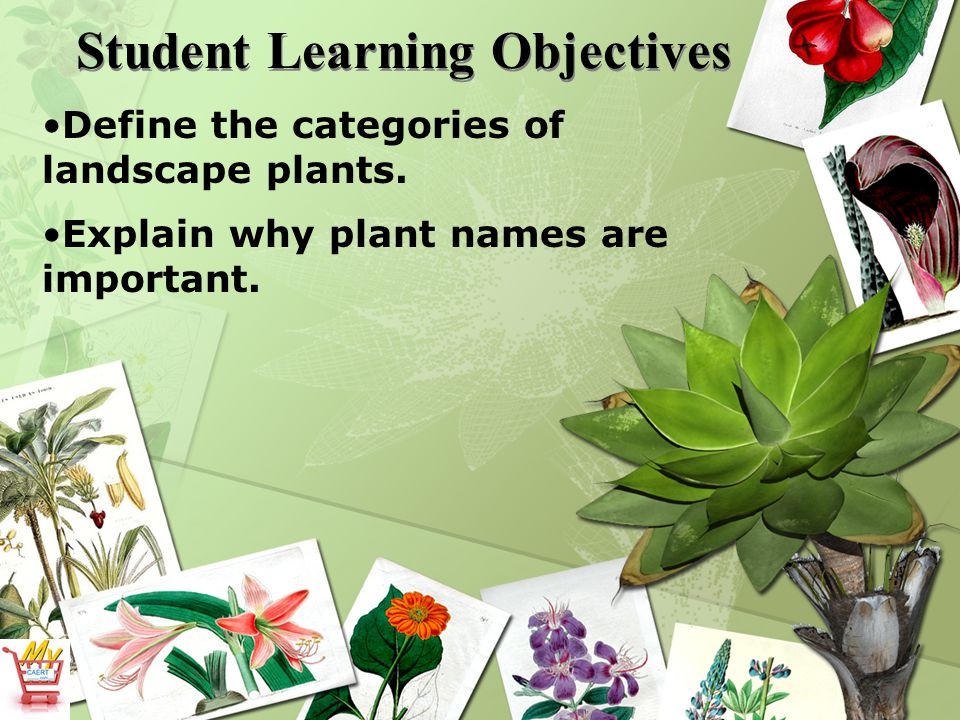 Student Learning Objectives Define the categories of landscape plants.