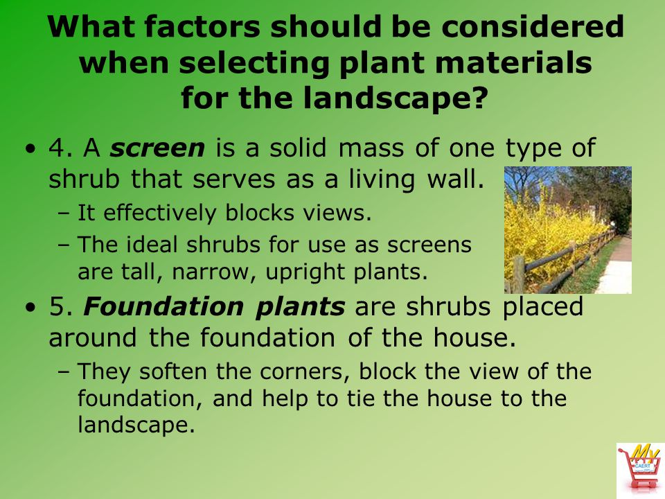 What factors should be considered when selecting plant materials for the landscape? 4. A screen is a solid mass of one type of shrub that serves as a