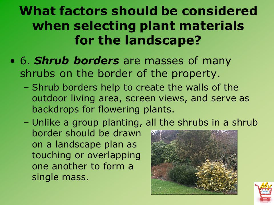 What factors should be considered when selecting plant materials for the landscape? 6. Shrub borders are masses of many shrubs on the border of the pr