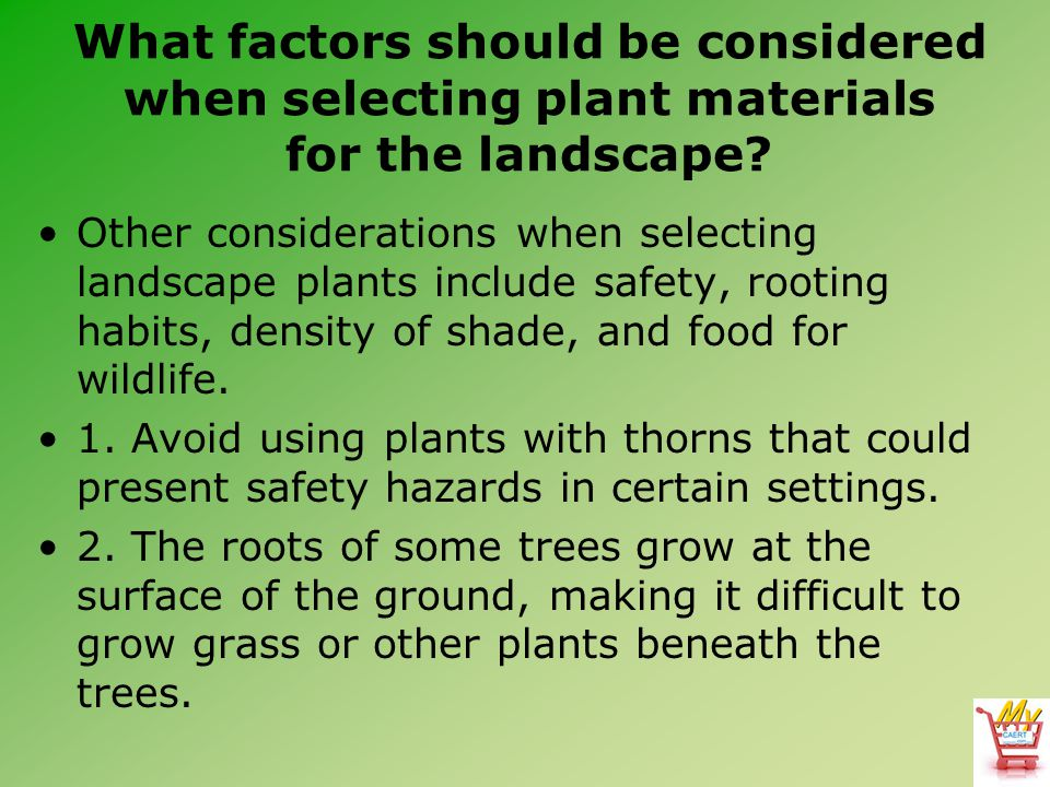 What factors should be considered when selecting plant materials for the landscape? Other considerations when selecting landscape plants include safet
