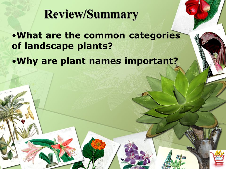 Review/Summary What are the common categories of landscape plants? Why are plant names important?