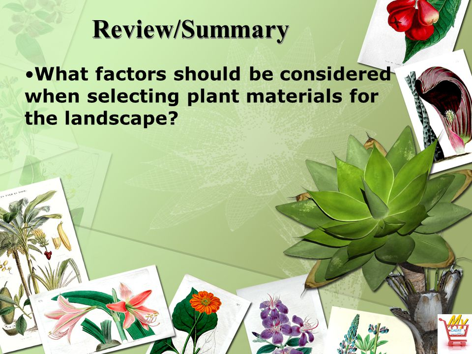 Review/Summary What factors should be considered when selecting plant materials for the landscape?