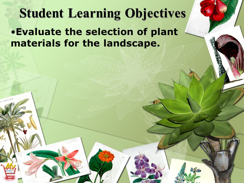 Student Learning Objectives Evaluate the selection of plant materials for the landscape.