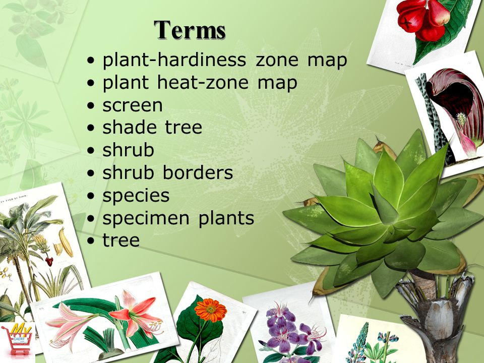 Terms plant-hardiness zone map plant heat-zone map screen shade tree shrub shrub borders species specimen plants tree