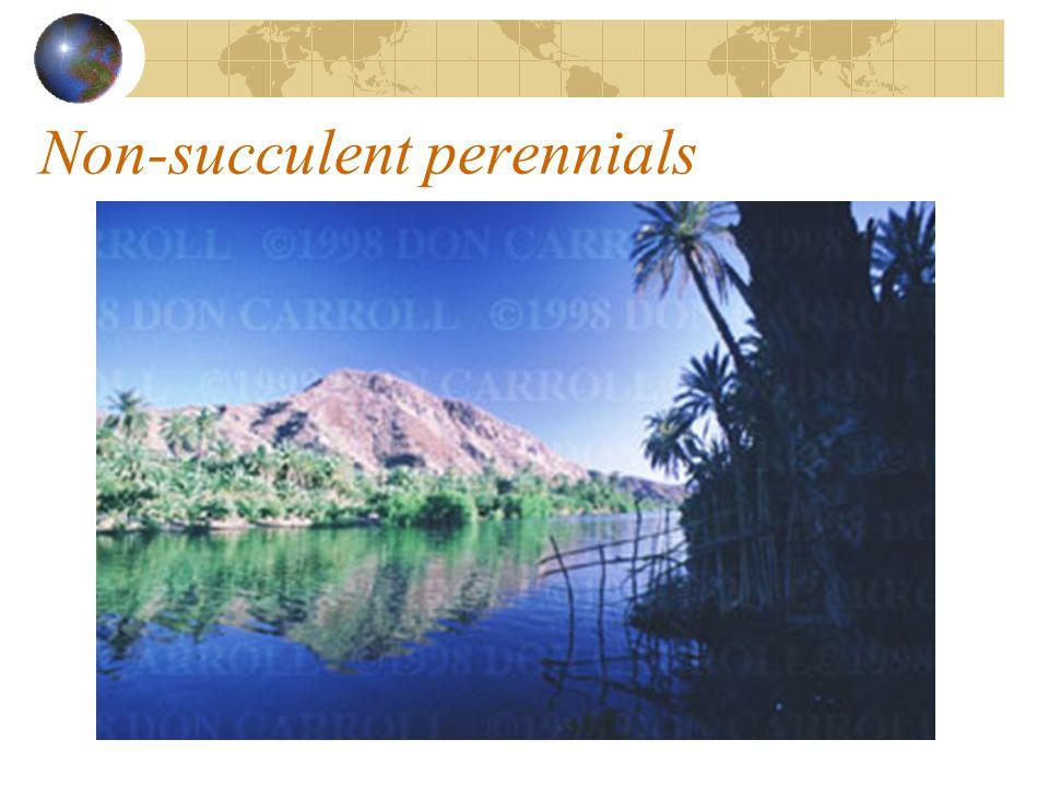 Non-succulent perennials