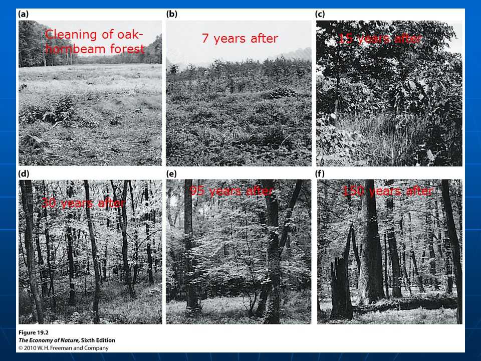 Cleaning of oak- hornbeam forest 7 years after15 years after 30 years after 95 years after150 years after