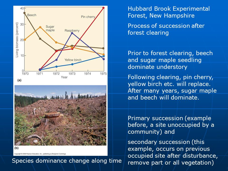 Species dominance change along time Hubbard Brook Experimental Forest, New Hampshire Process of succession after forest clearing Prior to forest clearing, beech and sugar maple seedling dominate understory Following clearing, pin cherry, yellow birch etc.