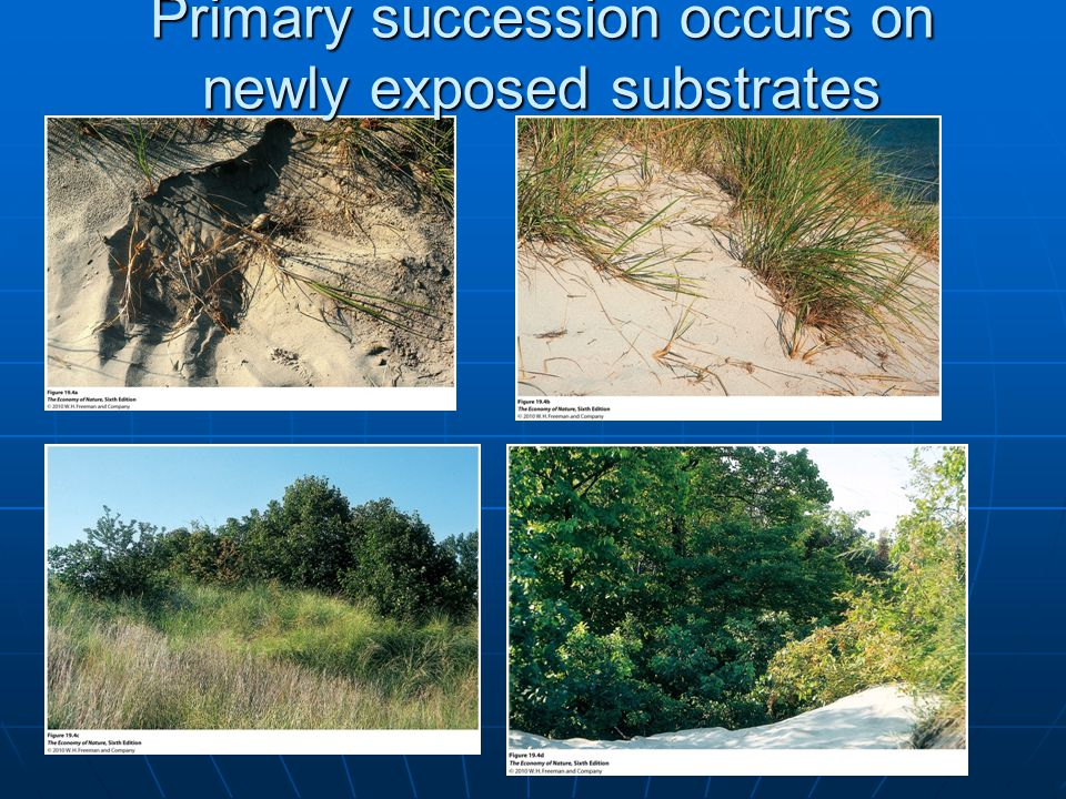 Primary succession occurs on newly exposed substrates