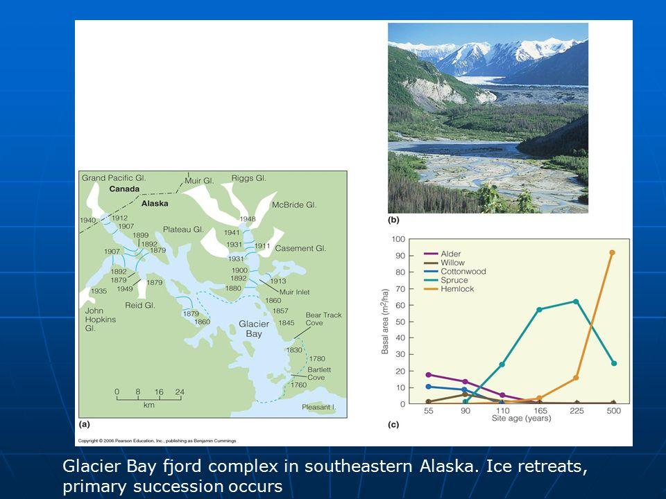 Glacier Bay fjord complex in southeastern Alaska. Ice retreats, primary succession occurs