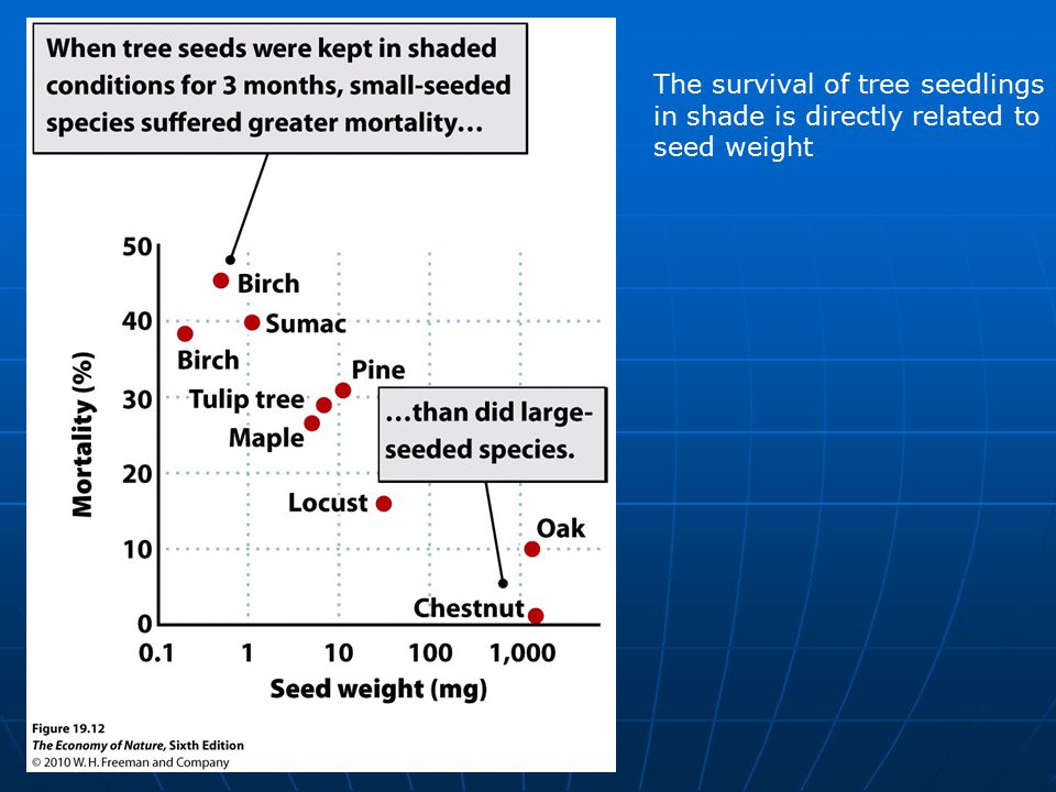The survival of tree seedlings in shade is directly related to seed weight