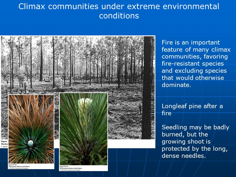 Climax communities under extreme environmental conditions Fire is an important feature of many climax communities, favoring fire-resistant species and excluding species that would otherwise dominate.