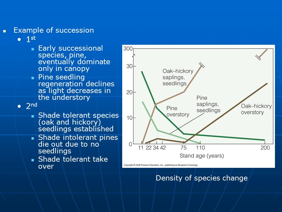 Example of succession 1 st Early successional species, pine, eventually dominate only in canopy Pine seedling regeneration declines as light decreases in the understory 2 nd Shade tolerant species (oak and hickory) seedlings established Shade intolerant pines die out due to no seedlings Shade tolerant take over Density of species change