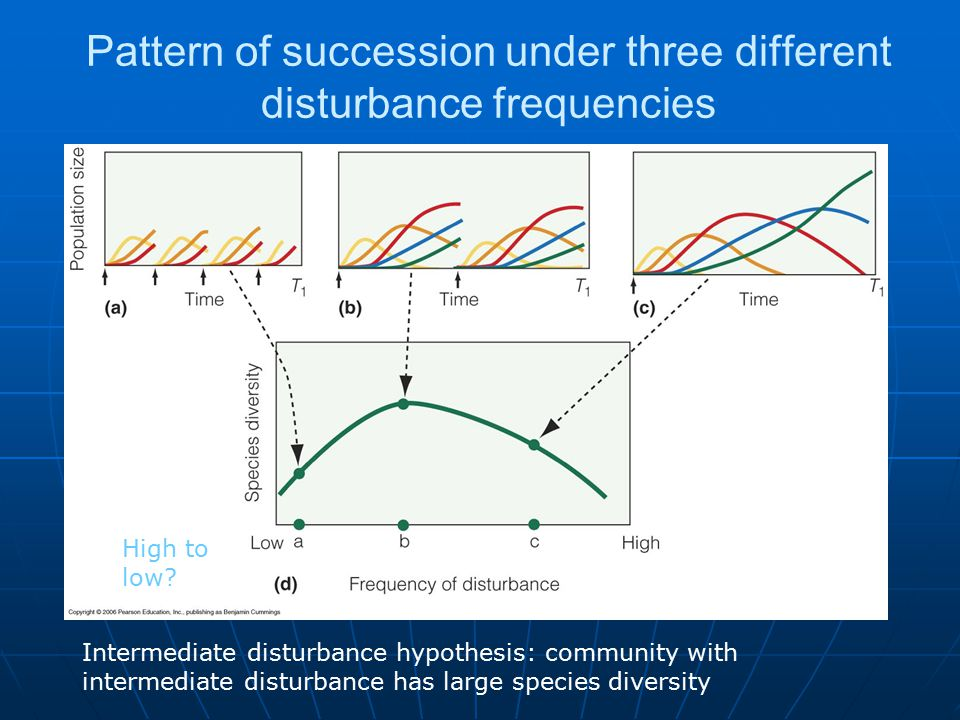 Pattern of succession under three different disturbance frequencies Intermediate disturbance hypothesis: community with intermediate disturbance has large species diversity High to low