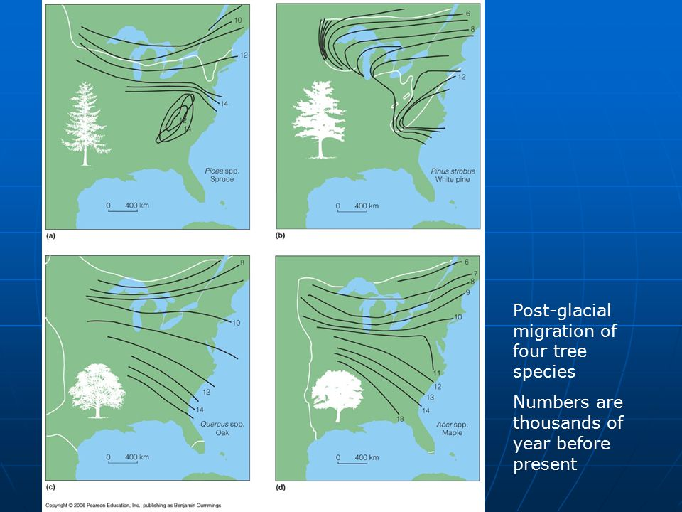 Post-glacial migration of four tree species Numbers are thousands of year before present