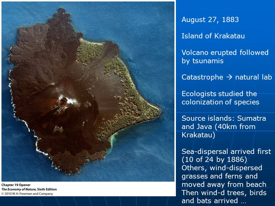 August 27, 1883 Island of Krakatau Volcano erupted followed by tsunamis Catastrophe  natural lab Ecologists studied the colonization of species Source islands: Sumatra and Java (40km from Krakatau) Sea-dispersal arrived first (10 of 24 by 1886) Others, wind-dispersed grasses and ferns and moved away from beach Then wind-d trees, birds and bats arrived …