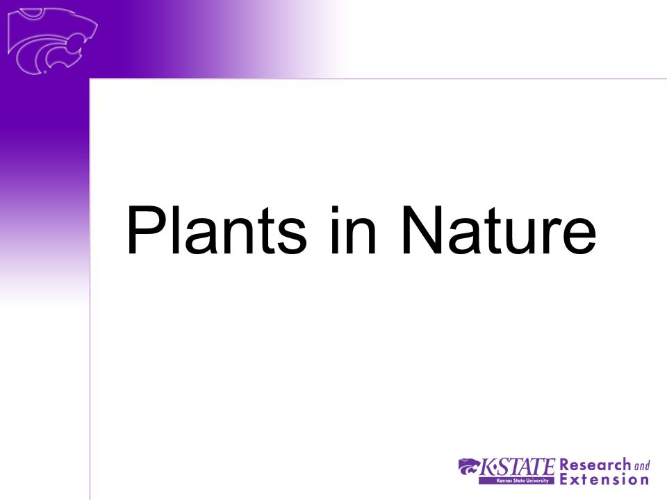 Plants in Nature