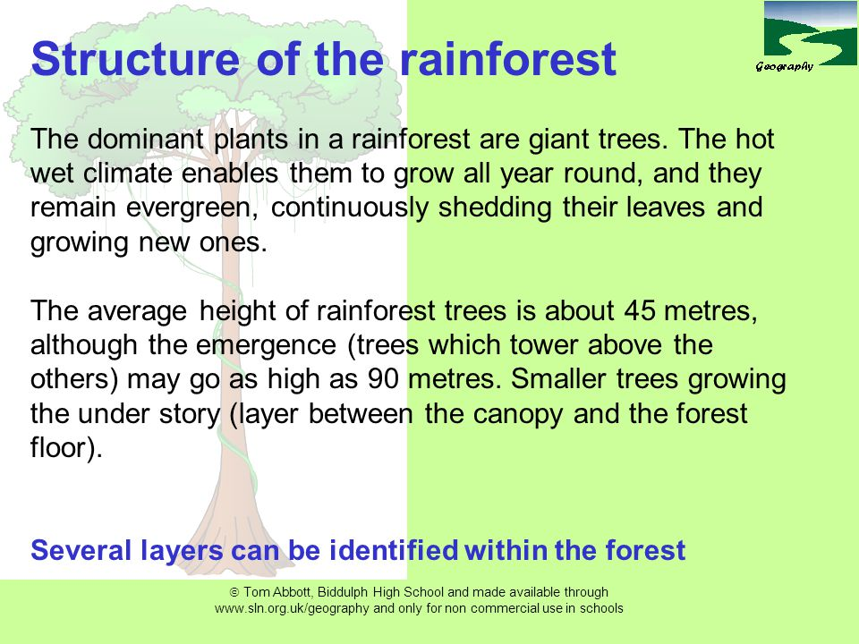  Tom Abbott, Biddulph High School and made available through www.sln.org.uk/geography and only for non commercial use in schools Structure of the rainforest The dominant plants in a rainforest are giant trees.