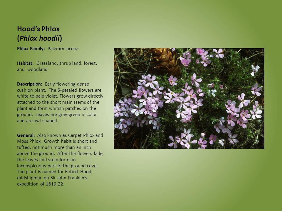 Hood's Phlox (Phlox hoodii) Phlox Family: Palemoniaceae Habitat: Grassland, shrub land, forest, and woodland Description: Early flowering dense cushio