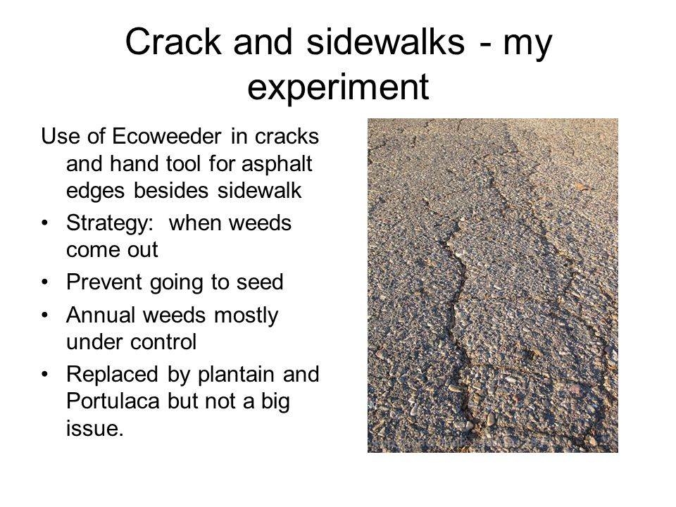Crack and sidewalks - my experiment Use of Ecoweeder in cracks and hand tool for asphalt edges besides sidewalk Strategy: when weeds come out Prevent going to seed Annual weeds mostly under control Replaced by plantain and Portulaca but not a big issue.