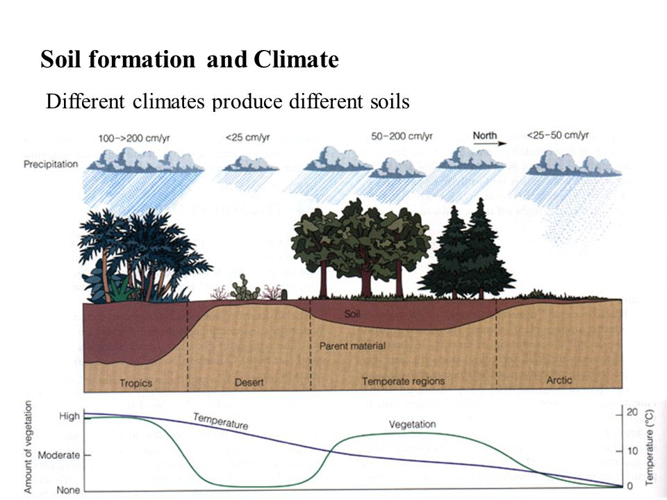 Soil formation and Climate Different climates produce different soils