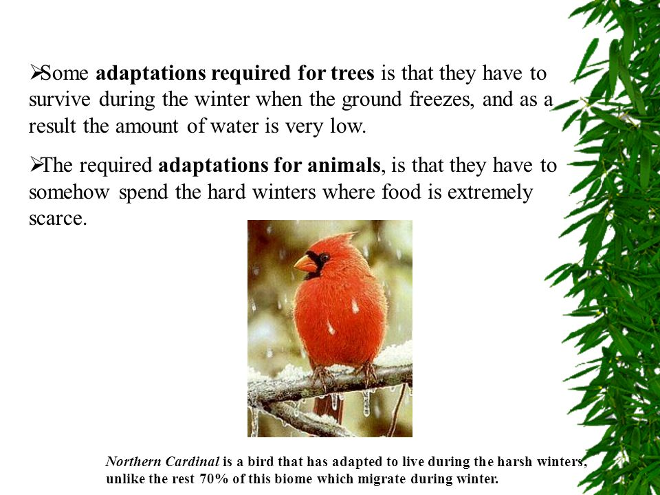  Some adaptations required for trees is that they have to survive during the winter when the ground freezes, and as a result the amount of water is v