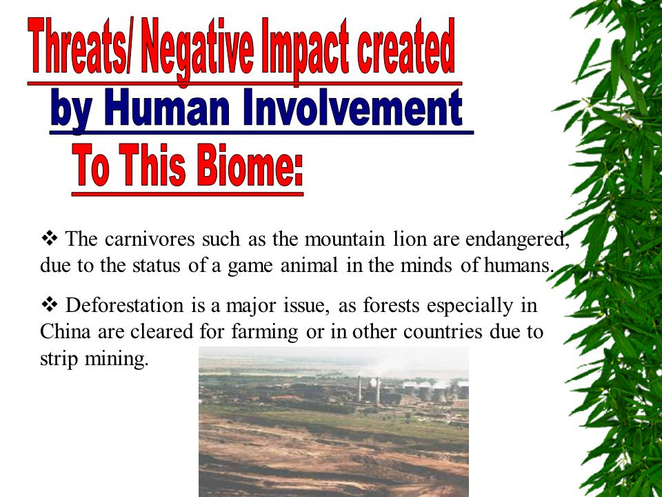  The carnivores such as the mountain lion are endangered, due to the status of a game animal in the minds of humans.  Deforestation is a major issue