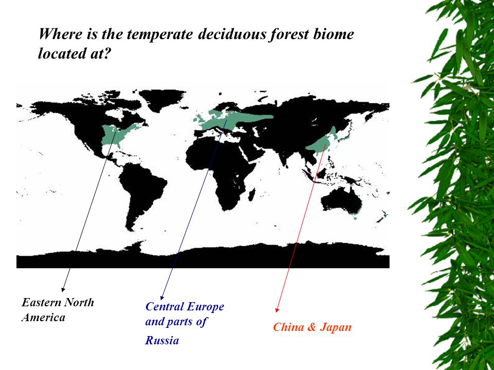 Where is the temperate deciduous forest biome located at? Eastern North America Central Europe and parts of Russia China & Japan