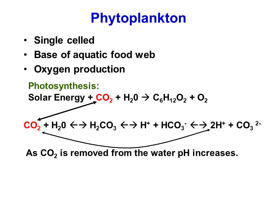 Phytoplankton Single celled Base of aquatic food web Oxygen production CO 2 + H 2 0  H 2 CO 3  H + + HCO 3 -  2H + + CO 3 2- As CO 2 is removed