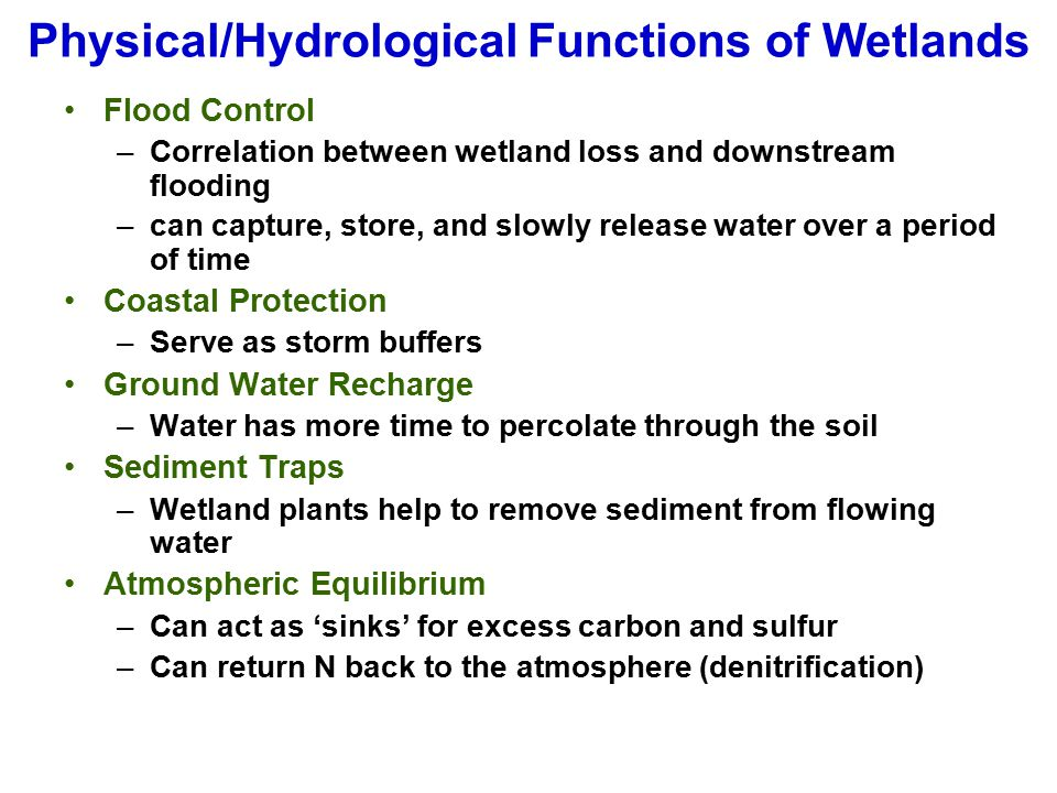Physical/Hydrological Functions of Wetlands Flood Control –Correlation between wetland loss and downstream flooding –can capture, store, and slowly re