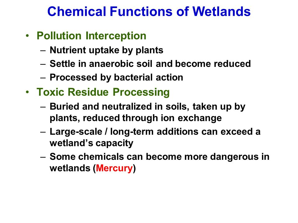 Chemical Functions of Wetlands Pollution Interception –Nutrient uptake by plants –Settle in anaerobic soil and become reduced –Processed by bacterial