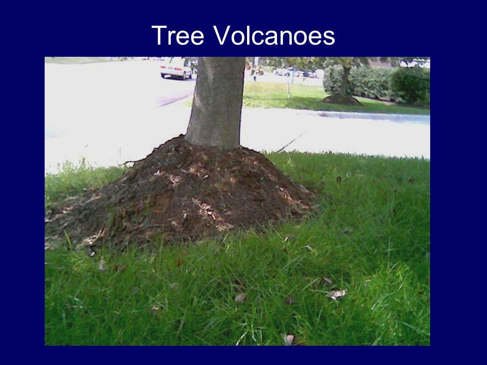 Tree Volcanoes
