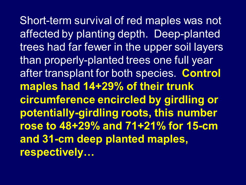 Short-term survival of red maples was not affected by planting depth.