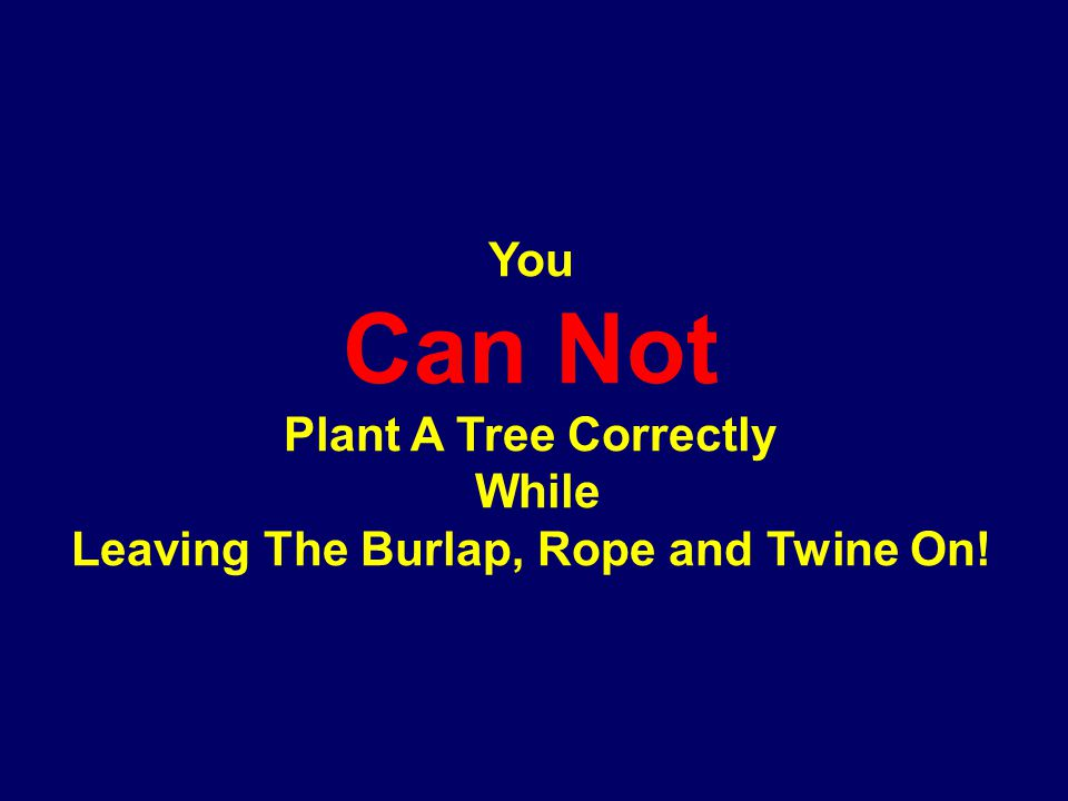 You Can Not Plant A Tree Correctly While Leaving The Burlap, Rope and Twine On!