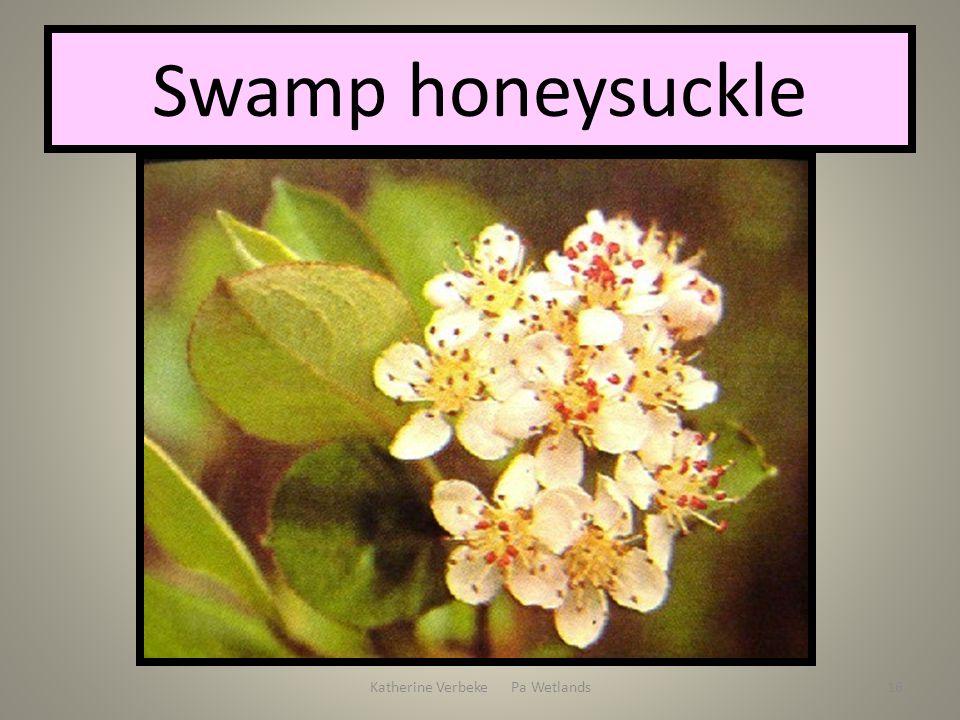 Katherine Verbeke Pa Wetlands16 Swamp honeysuckle