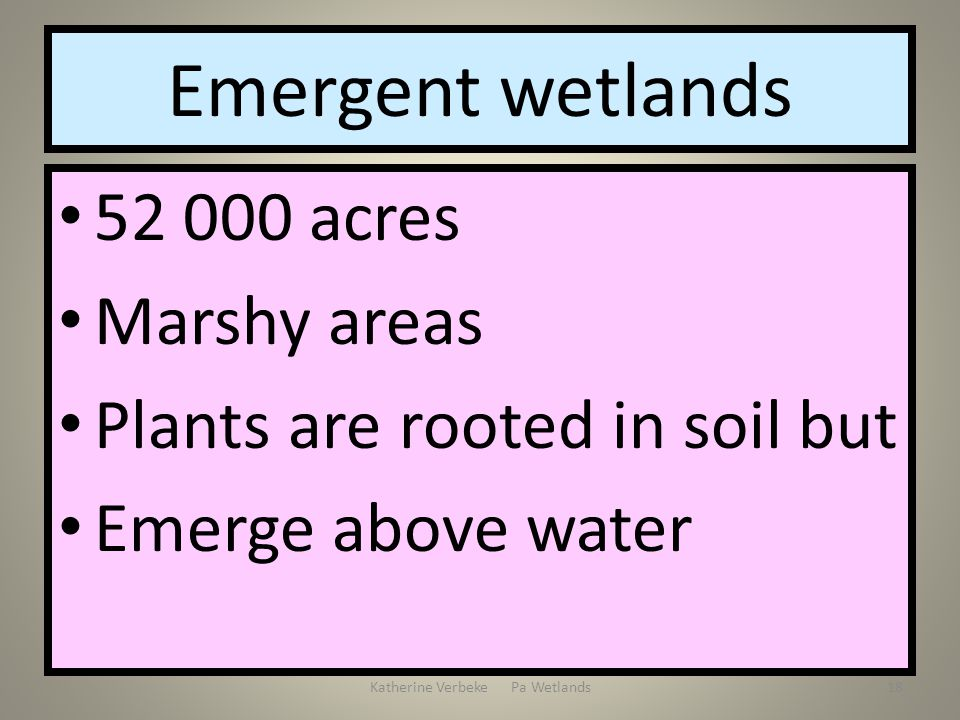 Katherine Verbeke Pa Wetlands18 Emergent wetlands 52 000 acres Marshy areas Plants are rooted in soil but Emerge above water