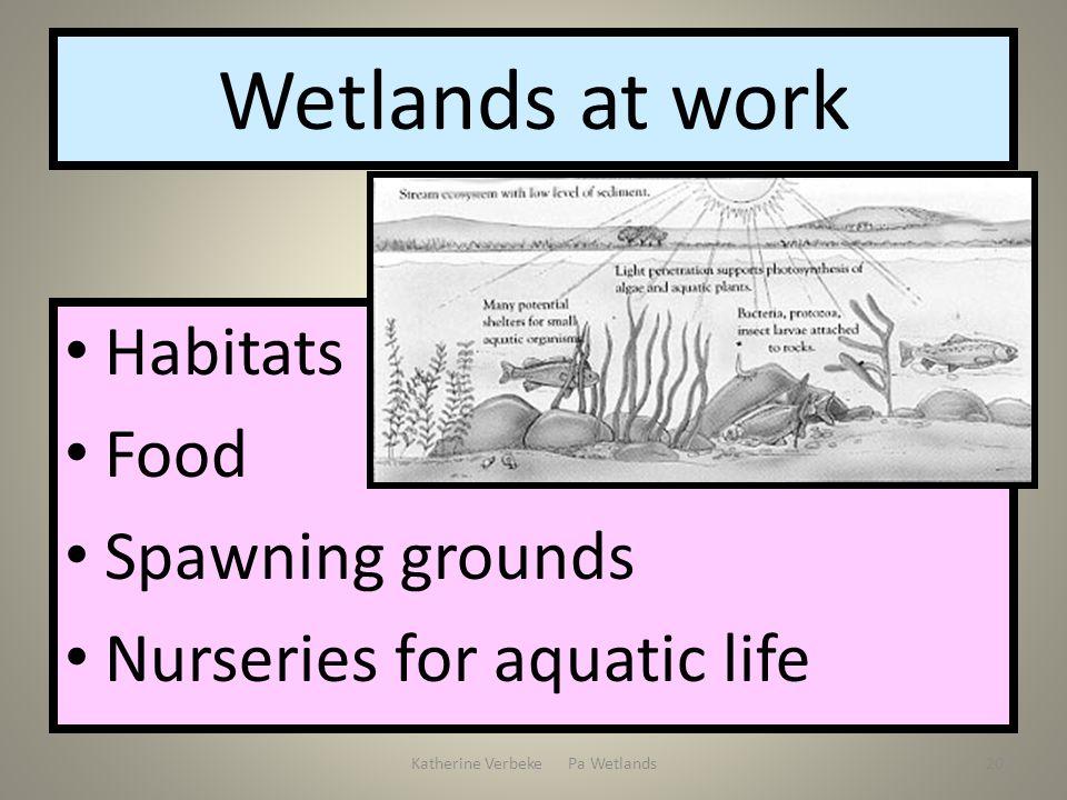 Katherine Verbeke Pa Wetlands20 Wetlands at work Habitats Food Spawning grounds Nurseries for aquatic life