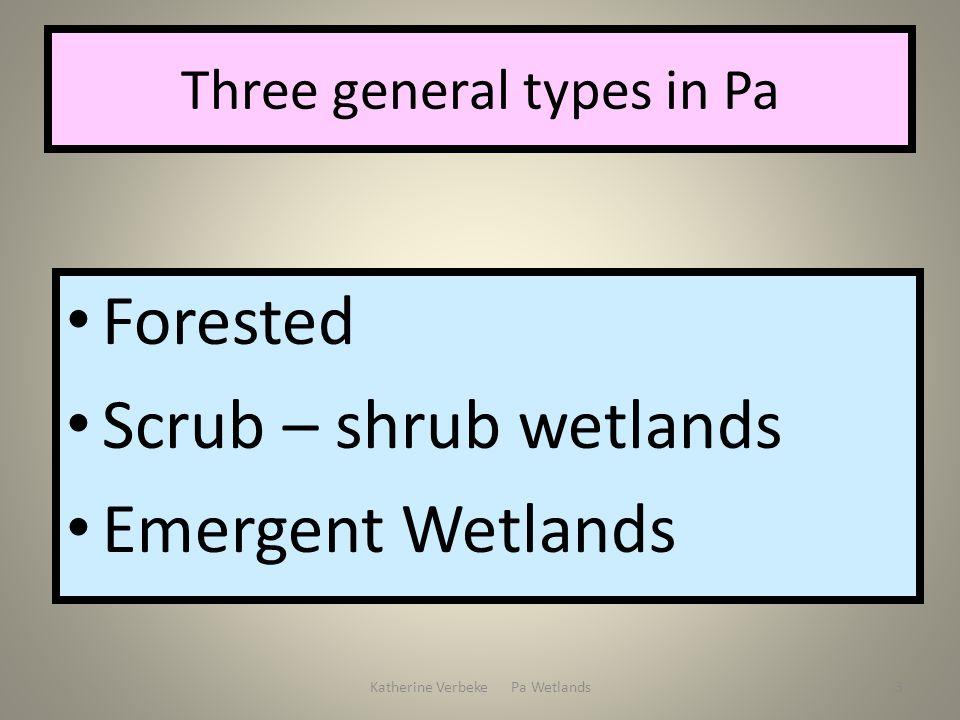 Katherine Verbeke Pa Wetlands3 Three general types in Pa Forested Scrub – shrub wetlands Emergent Wetlands
