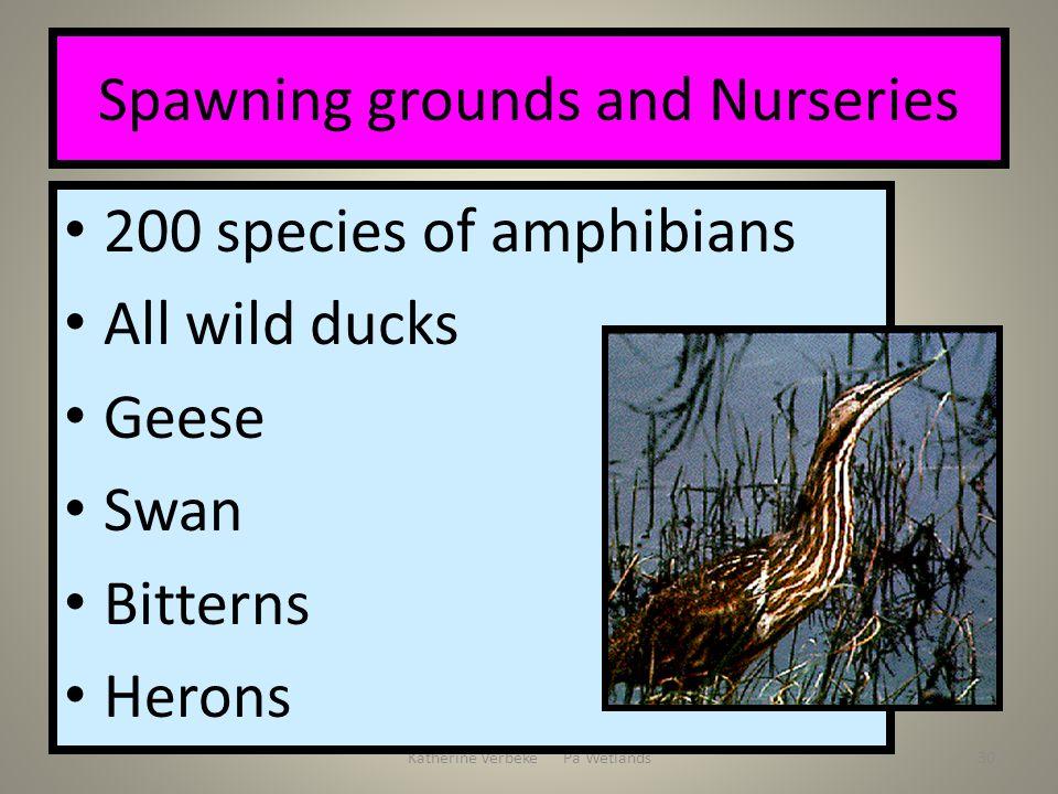 Katherine Verbeke Pa Wetlands30 Spawning grounds and Nurseries 200 species of amphibians All wild ducks Geese Swan Bitterns Herons