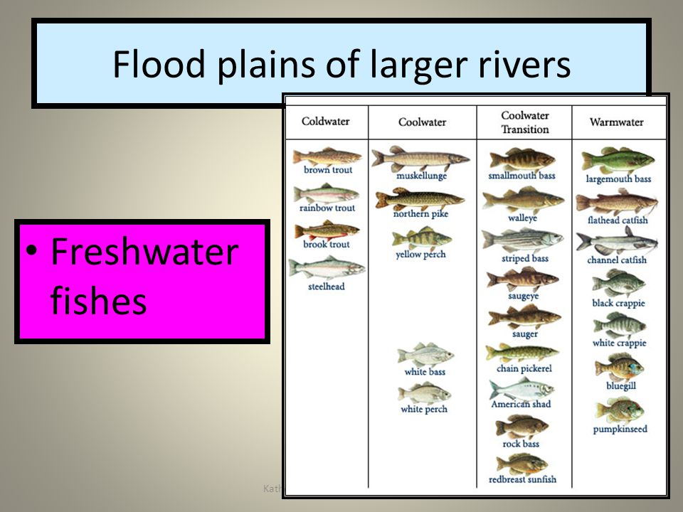 Katherine Verbeke Pa Wetlands31 Flood plains of larger rivers Freshwater fishes