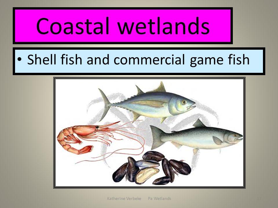 Katherine Verbeke Pa Wetlands37 Coastal wetlands Shell fish and commercial game fish