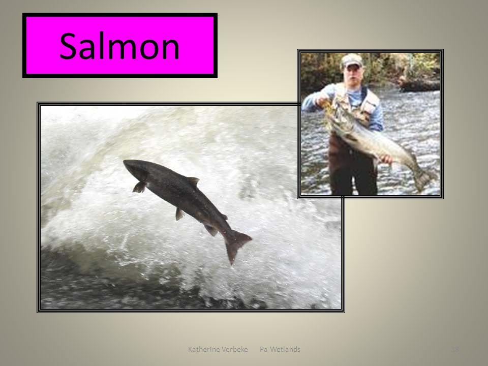 Katherine Verbeke Pa Wetlands38 Salmon